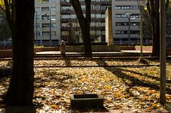 _DSC8453 (adrizufe) Tags: durango ezkurdi frayjuandezumarraga parque durangaldea duranguesado bizkaia basquecountry otoo udazkena autumn aplusphoto adrizufe adrianzubia d7000 nikon nikonstunninggallery ngc walking