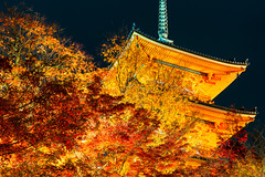 -   Kiyomizu-dera Temple in Autumn Night (Active-U) Tags:  japan  kyoto    night