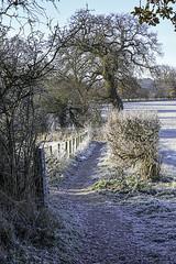 Winter Scene (Debree818) Tags: winterscene frost countryside