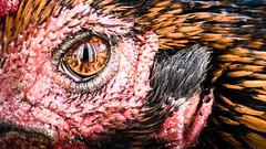 Birds eye (Stuie JW) Tags: rooster chicken eye macro nature reflection canon 80d 100mml cockerel