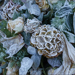 Frozen bouquet  (in Explore) thumbnail