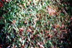 28-114 (ndpa / s. lundeen, archivist) Tags: color film grass fiji 35mm blurry nick ground suva outoffocus southpacific 28 1970s 1972 dewolf oceania fijian pacificislands burnframe nickdewolf beginningoftheroll photographbynickdewolf beginningofroll burnedshot burnedframe burnshot reel28