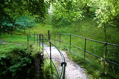 Between the Showers (DrupkaTheUnclear) Tags: uk bridge fern tree green wet rain shower backlit railings westyorkshire haworth hebdenbridge crimsworthdean packhouse lumbhole