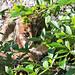 Cochnewagon Bobcat 2 - G Burdwood