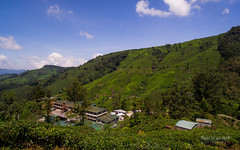 Boh Tea Factory (m4rtinovic) Tags: travel summer food zeiss monkey asia jungle malaysia kualalumpur tanahrata cameronhighlands malaka distagon langtengah pulaulangtengah bohtea zeisslenses sonya7 fe24240