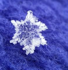 Feeling blue (jilllian2) Tags: snowflake blue macro snowcrystals macromonday olloclip iphone6s