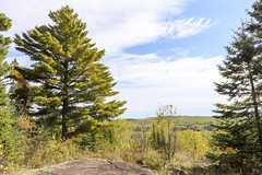 White Pine with a View (gamelaner) Tags: tree minnesota whitepine superiorhikingtrail hovland