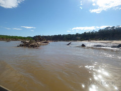 Secure River, Beni, Bolivia, July 2015 (Likestofish) Tags: travel winter foothills america fishing amazon south bolivia basin jungle rivers andes flyfishing wilderness neotropical tipnis tsimane