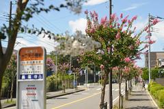 20150822-DS7_2069.jpg (d3_plus) Tags: street sky plant flower sports nature japan 50mm football nikon scenery daily bloom  streetphoto nikkor   dailyphoto  50mmf14 futsal thesedays   50mmf14d  nikkor50mmf14   afnikkor50mmf14 d700 nikond700 aiafnikkor50mmf14  nikonaiafnikkor50mmf14