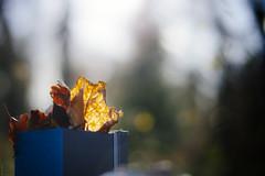 Leaves In A Box °322/365 (donlunzo16) Tags: lighting city color film leaves trash forest lens town leaf woods nikon df raw nef stuttgart bokeh box blurred pack rubbish backlit nikkor 58mm vignette afs lightroom f114 day322 preset vsco day322365 365the2015edition 3652015 18nov15