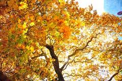 Greece is... (sifis) Tags: light color colour tree nikon greece 2470 sakalak d700