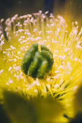 Capullo (Timoteo PH) Tags: naturaleza flower macro verde green love nature beautiful yellow photo flora natural flor amarillo lovely hermosa pasin macrofotografia sanantoniodeareco canon1855mm canondigitaleos canonargentina canonimagination canont4i lightroomcc2015 timoteocucullu