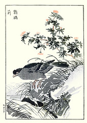 Thistle and crested myna (Japanese Flower and Bird Art) Tags: flower bird art japan japanese book thistle picture crested cirsium asteraceae woodblock nihonga myna maekawa acridotheres sturnidae cristatellus readercollection bunrei