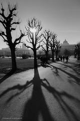 Heldenplatz (ralcains) Tags: vienna wien bw tree blancoynegro monochrome canon arbol lights austria monocromo luces blackwhite österreich shadows fujifilm neopan viena sombras eos5 acros heldenplatz streetphotograhy greatphotographers