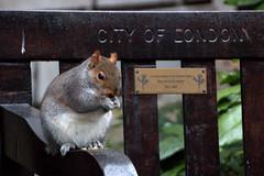 City of London (soetendaal) Tags: park city travel england london squirrel parc londa eekhoorn