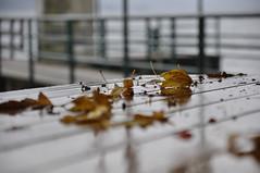 Oberosterreich Attersee DSC0896 (reinhard_srb) Tags: obersterreich salzkammergut attersee herbst regen kalt menschenleer ufer promenade tisch laub bltter nass gelnder steg trbe melancholisch