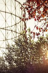 Autumn (robyf80) Tags: autumn gasometro rome roma leaves sunset sun autunno sky
