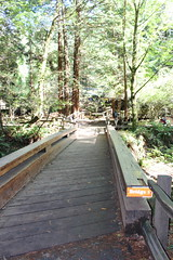 Bridge 1 (CAYphotos) Tags: muirwoods redwoods nationalpark millvalley trees