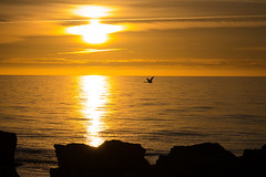 Morning flight (Infomastern) Tags: gotland holmhllar attackfoto attackfoto8 hav morning sea soluppgng sunrise exif:model=canoneos760d exif:aperture=11 geocountry camera:make=canon exif:isospeed=100 camera:model=canoneos760d geostate geolocation exif:lens=efs18200mmf3556is geocity exif:focallength=80mm exif:make=canon