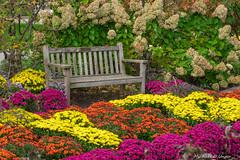 Park Bench-2016-3.jpg (scorpio71gr) Tags: colors frederickmeijergardens k3 parkbench pentax tamron7020028