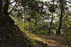 Hiwweltour Weidenblick :: Rheinhessen (tmertens0) Tags: hiwweltour weidenblick rheinhessen siefersheim neubamberg alzey bingen bad kreuznach rheinland pfalz deutschland germany wandern landschaft heide weinberg wein wine wineyards wald forest hügel hills natur nature sonne sun herbst fall gegenlicht backlight waldweg pentaxm 50 14