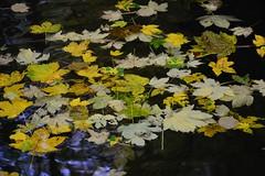 DSC_8963 (Daniele4Gatti) Tags: acqua fiume foglie colore
