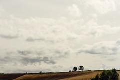 HillTopView Hills Cloud - Sky Landscape Beauty In Nature Agriculture Field Biei Hokkaido Hokkaido,Japan Cloudy Sky September September 2016 Travel Wood (T.M Photos) Tags: hilltopview hills cloudsky landscape beautyinnature agriculture field biei hokkaido japan cloudysky september september2016 travel wood