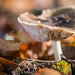 """2016_10_31_Champignons-22 • <a style=""""font-size:0.8em;"""" href=""""http://www.flickr.com/photos/100070713@N08/30060073403/"""" target=""""_blank"""">View on Flickr</a>"""