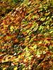 The fall (jeansmachines24) Tags: clyne november2016 autumn foliage