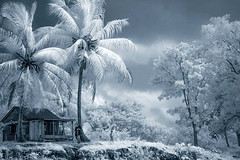 rio_grande_nicaragua (charles.baldy) Tags: riogrande raas nicaragua armut pobreza fauna flora infrared infrarojo inrfrarot miskito ir