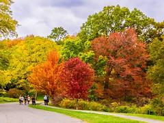Fall Color at the Arboretum ((Jessica)) Tags: autumn arnoldarboretum seasonal foliage pw boston seasons newengland trees massachusetts fall arboretum woburn hornpond