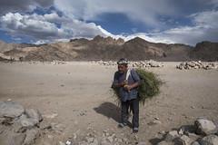 Farmer (Ravikanth K) Tags: 500px leh ladakh people travel india jammuandkashmir farmer grass outdoor mountains landscape men work