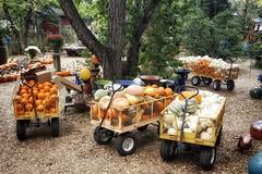 Pumpkins and Gourds (Flickr Goot) Tags: september 2016 samsung galaxy s6 project 365 project365 pumpkin gourd