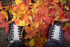 colors of autumn I (Marcel Cavelti) Tags: bq0a8749bearb colors autumn leaves orange shoes yellow