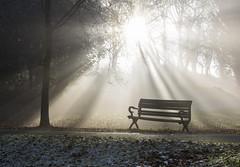 A Seat in the Spotlight (CarolynEaton) Tags: bristol fog bench
