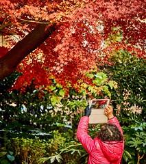 Shangai parks at autumn (Pavel Dvorak ml.) Tags: ifttt instagram china asia travel shanghai