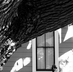 Perception starts as sensation changes (Dom Guillochon) Tags: nature time life old carriage house tree self window reflection existence reality dream urban sunlight shadows reflecting wood
