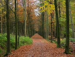 Asserbos (Geziena) Tags: bos herfst autumn kleuren natuur
