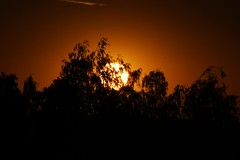 Herbstsonne (kkaarlyy) Tags: germany deutschland freiberg dresden saxony sachsen sun sunset dawn eve evening sky skyporn unreal color colors colorful orange yellow rainbow clouds sonne sonnenuntergang himmel hintergrund backround gelb farben farbe farbig bunt regenbogen wolke wolken wolkig cloudy cloudporn cloud abend dmmerung night nightshoot nightshot nacht nachts silhouette shadow shadows black zweifarbig close up schatten