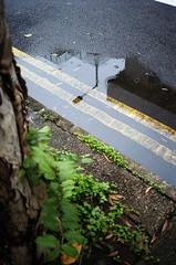 city in rain (Steve only) Tags: minolta himatic af2 38mm 128 3828 f28 rf rangefinder fujifilm 富士業務紀錄用カラーフィルム100 100 film epson gtx970 v750 snaps city rain reflection