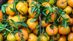Fresh mandarin fruits (phuong.sg@gmail.com) Tags: circle citric citrus closeup color cross cut diet edible food fresh freshness fruit group healthy heap ingredient juice juicy lifestyle mandarin natural nature object orange organic raw refreshing refreshment ripe round section segment skin slice sliced sweet tangerine taste tasty vitality vitamin yellow
