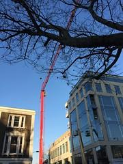 red crane (Hayashina) Tags: red crane tree branches london