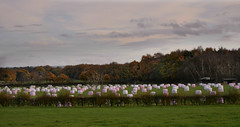 GM foods (PentlandPirate of the North) Tags: marshmallows congleton hay bales wrapped round gmfoods farm field