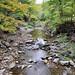 0805 Robert H Treman State Park