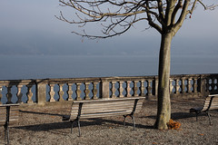 a quiet mystic place (picturesbywalther) Tags: place ort spiez see lake winter leica thunersee bern landscape landschaft outdoor stillive stilllife baum tree bench bank park