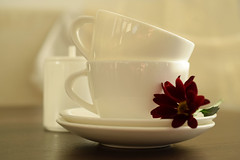 Tea for two (adelina_tr) Tags: cup tee dof morning 7dwf 7dayswithflickr crazytuesdaytheme