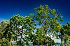 Bush at Mandorah Beach (betadecay2000) Tags: bush mandorah beach darwin northern territory australia australien busch trees tree baum bume ozeanien australischer outdoor pflanze urwald gras grass pflanen grn green natur nature himmel blau eukalyptus idylle wildnis forrest timber wood woods wald wlder waelder austral australie landschaft feld heiter