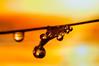 MACRO D300S SIGMA105 (Mario jr Nicorelli ( Salgareda Treviso )) Tags: mottadilivenza marionicorelli macrofotografia macro montagne oderzo pontedipiave piave salgareda sandonàdipiave circolo centro stile