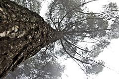 IMG_8333 (Juan Manuel Sanchez) Tags: otoo adrianospicture juanmanuelsanchez hojas arce rojo niebla fog campo montaa madrid espaa canon d60 naturaleza maana cielo silueta contraluz cesped hierba bosque norte