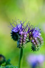 Flower. (Jantje1972) Tags: flower flowers bloem bloemen fleur